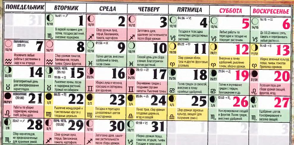Что можно сажать в сентябре 23